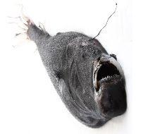 American Angler.jpg