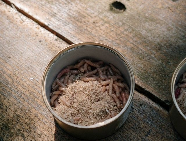 A can of worms placed on a wooden floor