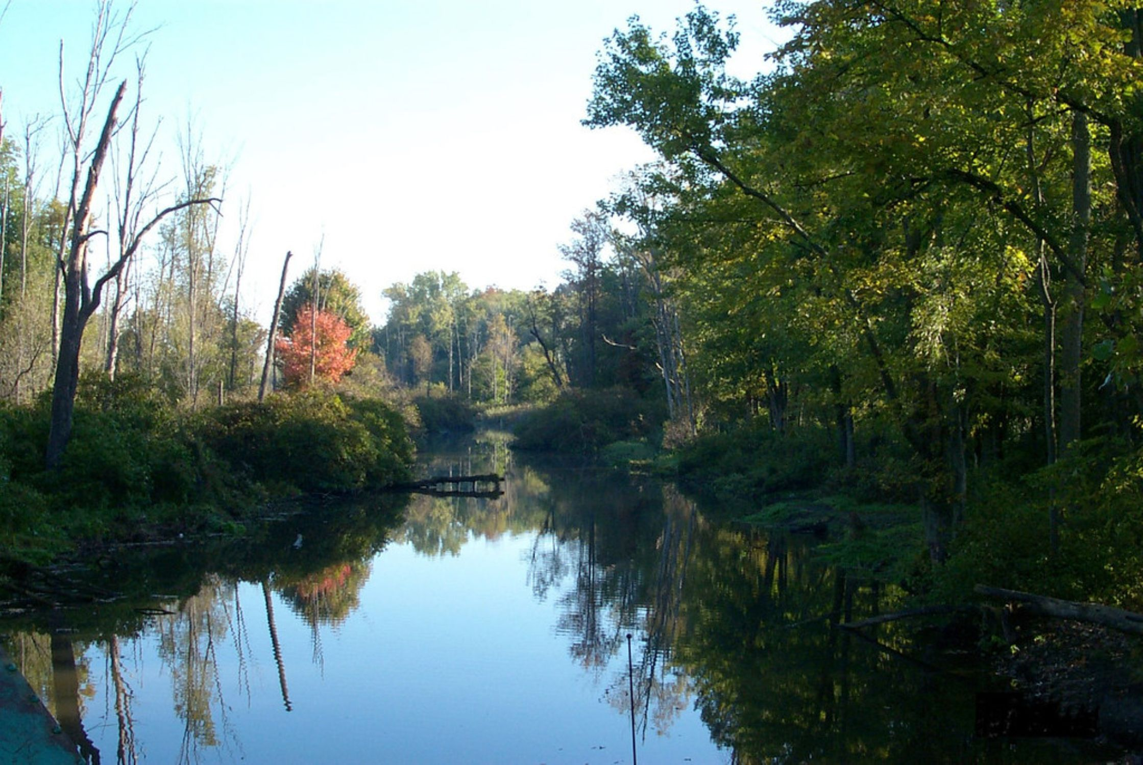 Reflection of trees on Oak Orchard Creek