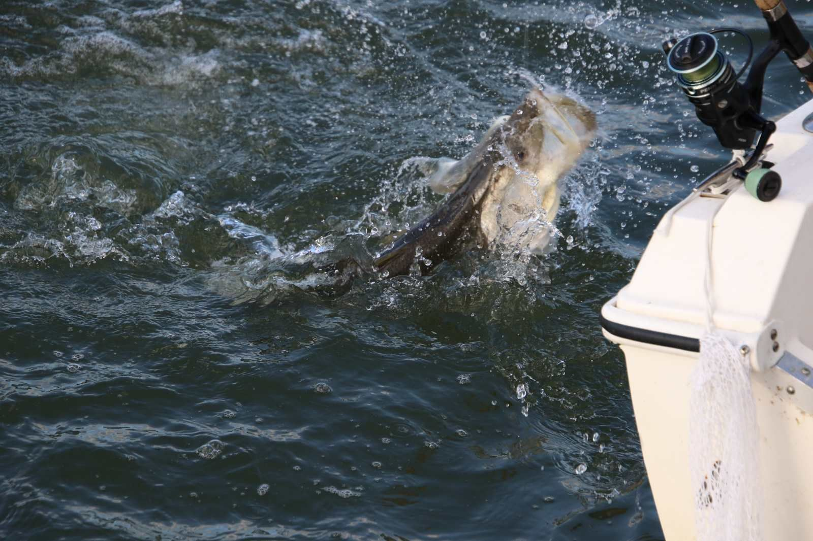 Sanibel Island Snook Fishing Fort Myers