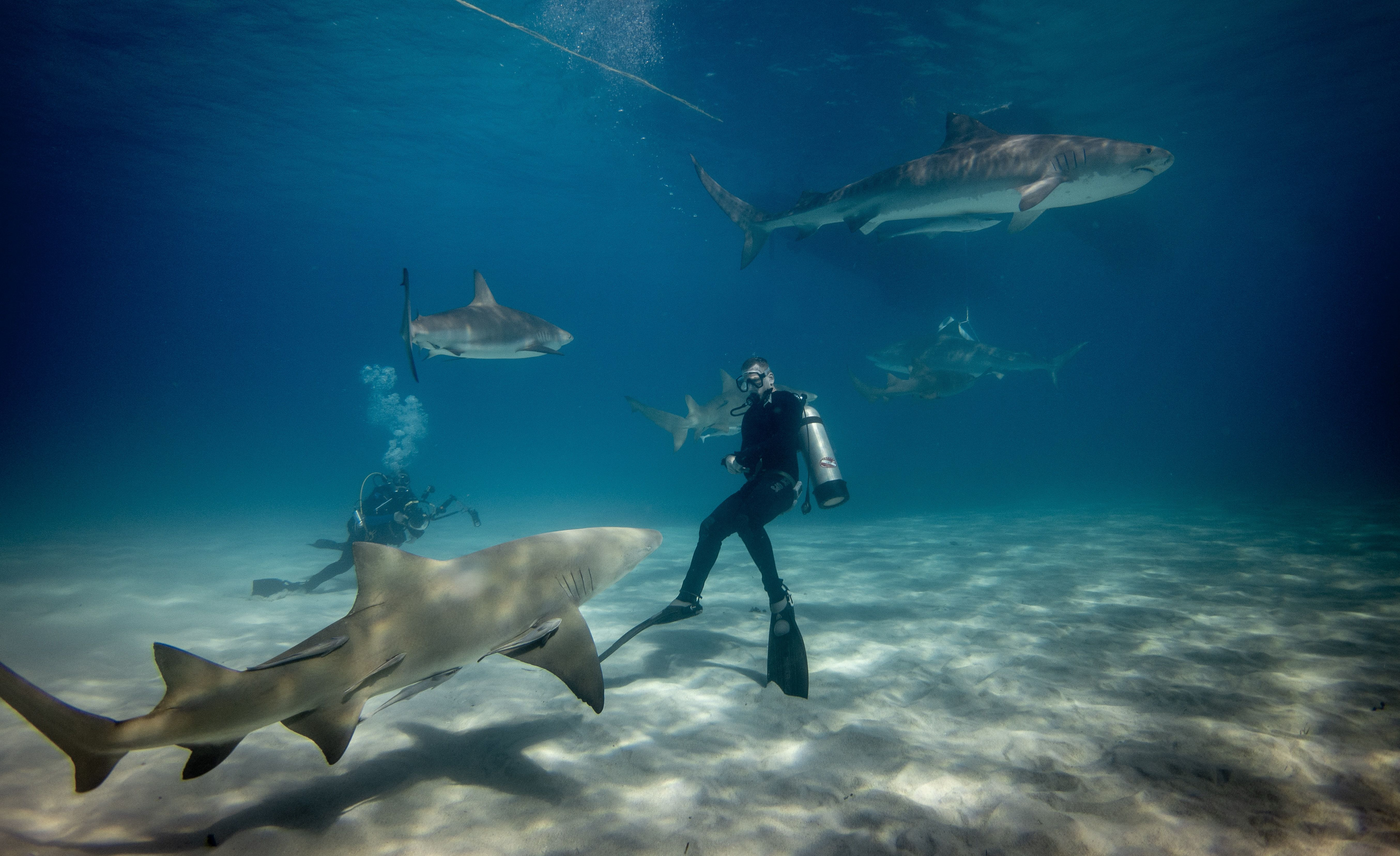 two persons swimming with sharks