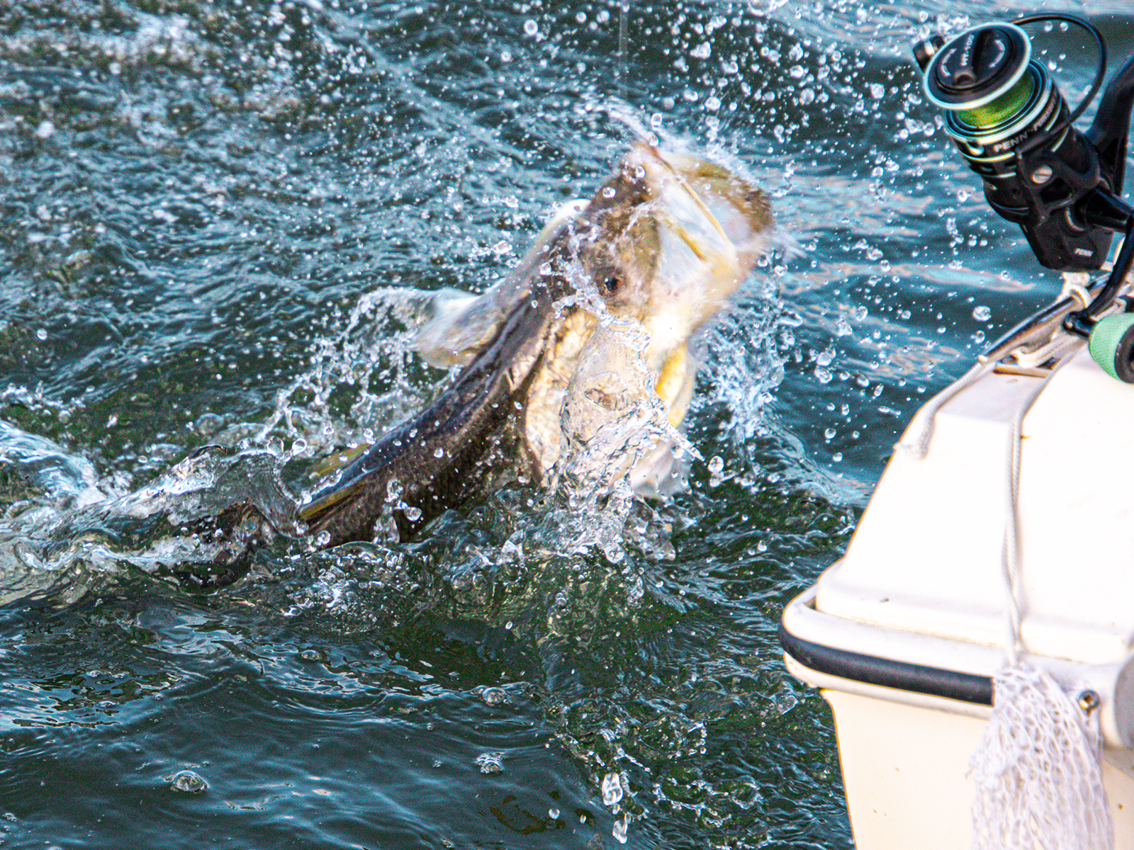 Snook_Fishing_0004