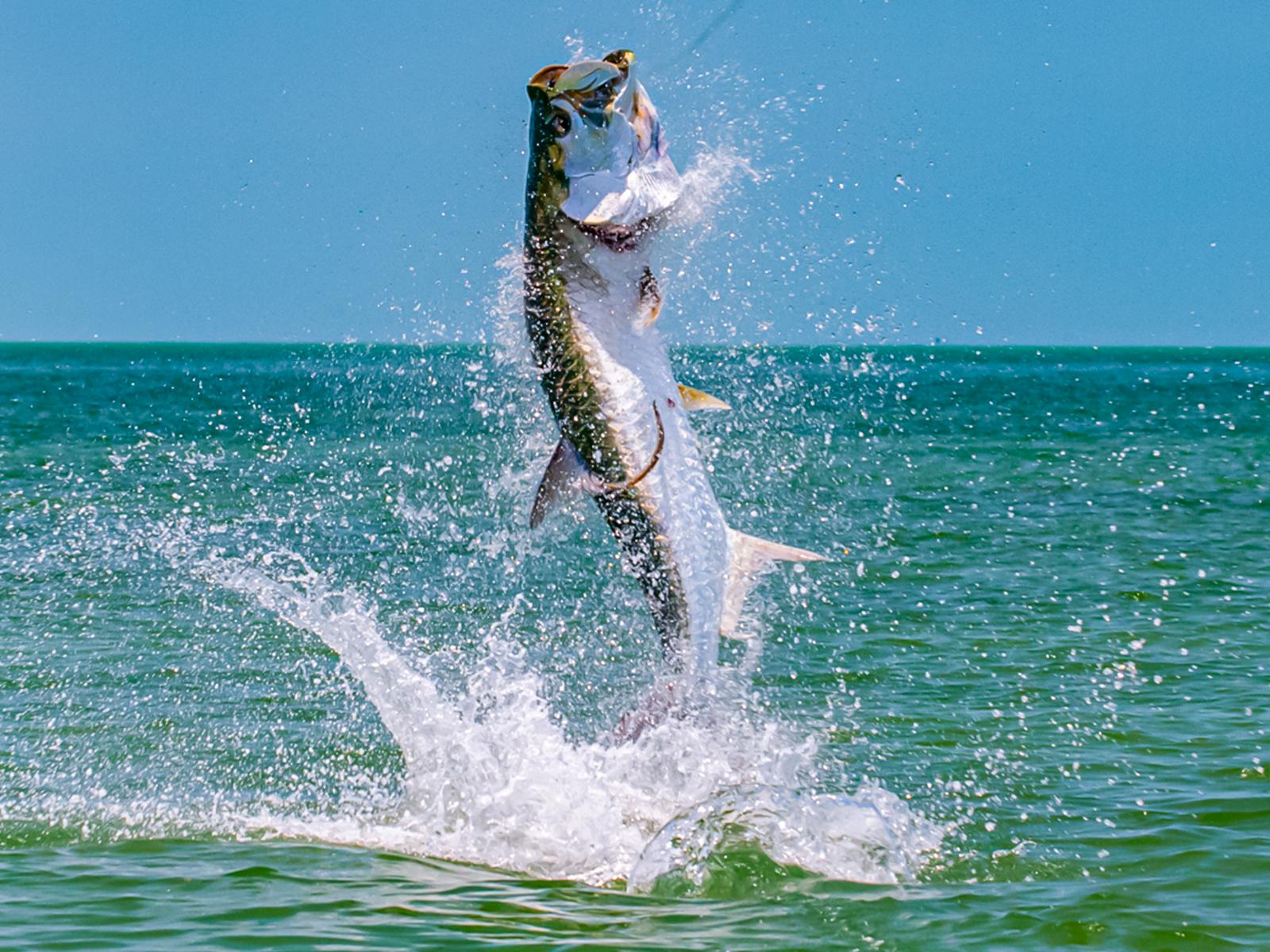 Tarpon Fishing_01
