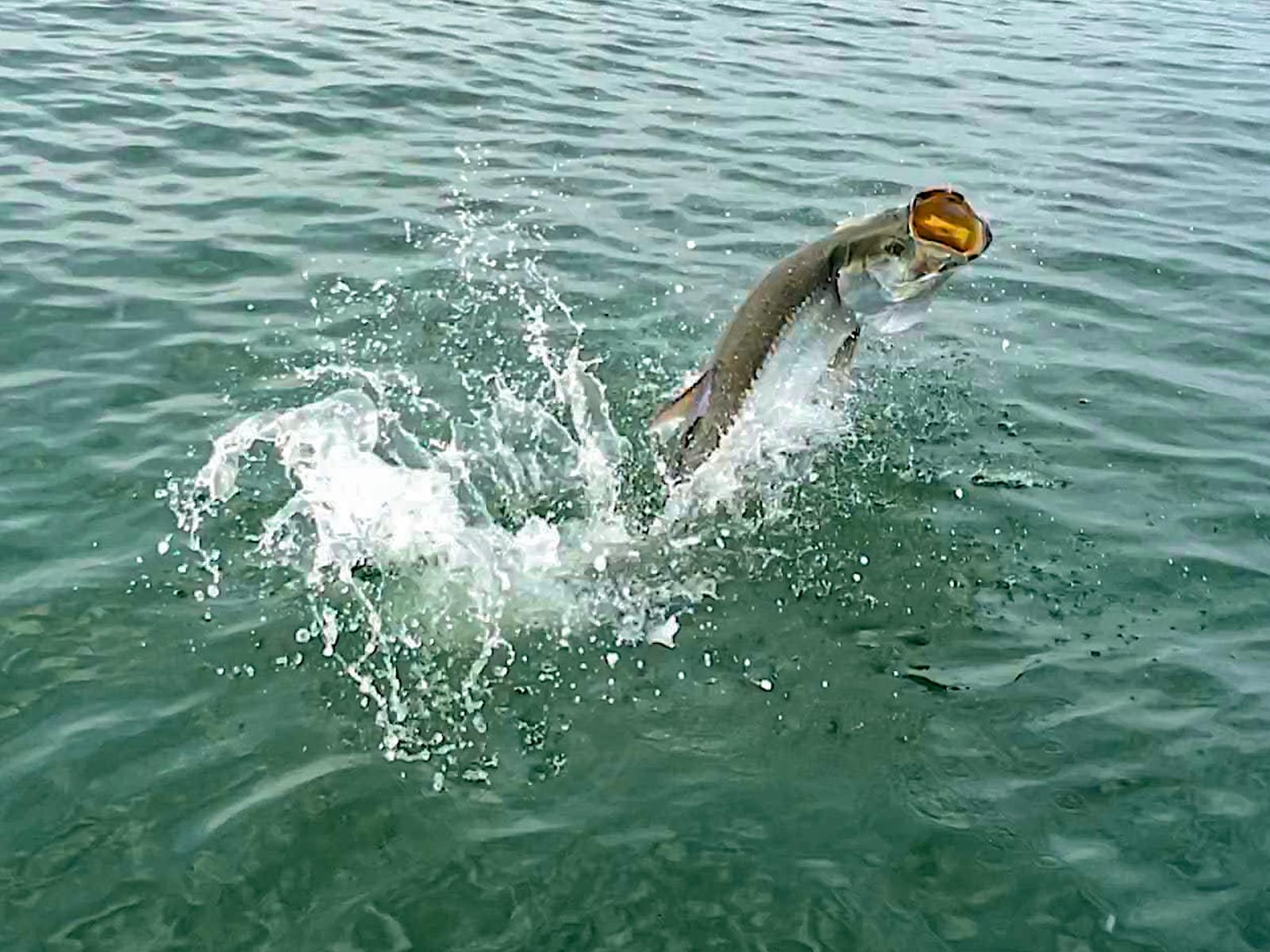 Silver Tarpon Fishing