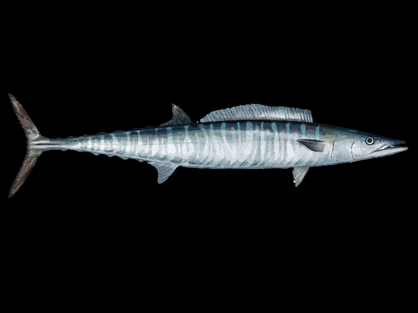 WahooFish